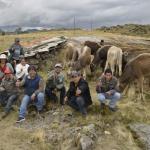 GRALL Viene Entregando 128 Vaquillas de Raza Brown Swisss a Productores de la Libertad