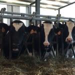 Adaptan Granjas al Cambio Climático para Evitar el Estrés por Calor en las Vacas