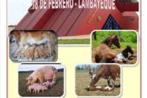 Lambayeque: II Simposio de Teriogenología 🗓