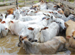desastres _naturales_peru_apoyo_medicos_veterinarios