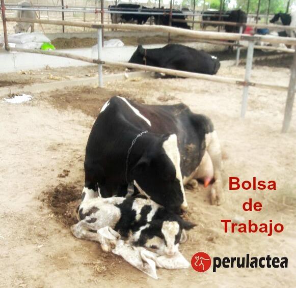 establo_solicita_tecnico_agropecuario_Peru