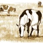 Ganadería: Manejo Racional no Contamina el Medio Ambiente