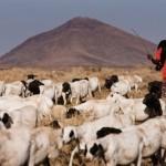 Hacia un sector ganadero más sostenible