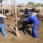 Minagri Descarta Casos de Ántrax en Animales