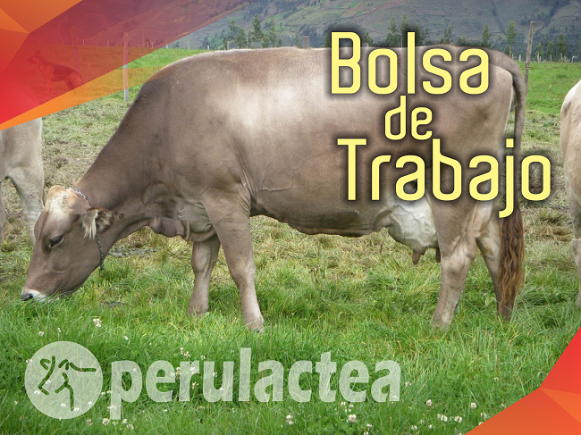 bolsa_de_trabajo_ganaderia_peru