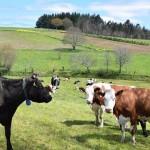 Boom de la Producción de Carne Ecológica en Irlanda