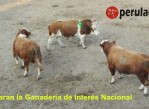 declaran_la_ganaderia_como_interes_nacional_en_Peru