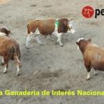 Organizaciones Ganaderas Firman Declaratoria de la Agricultura y Ganadería del Perú como Interés Nacional