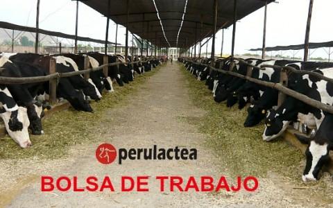 establo_chancay_bolsa_de_trabajo