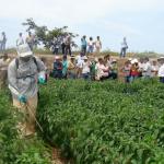 Manejo Integrado de Forrajes en Amazonas