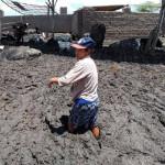 Ganaderos Reportan Grandes Pérdidas Tras Lluvias en el Norte del País