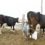 Gloria Mencionó que Reiniciará sus Operaciones en la Planta de Huachipa