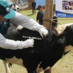 Declaran Alerta Sanitaria Animal en 11 Regiones del Perú Tras Inundaciones