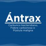 Senasa: Como Evitar la Posible Aparición del Antrax por los fenómenos Climáticos