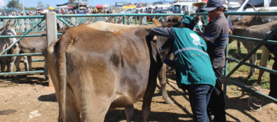 Senasa Capacita a Productores para Prevención de Carbunco Sintomático en Arequipa