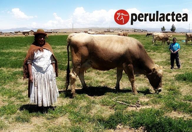 unidad_ganadera_peruana_2017