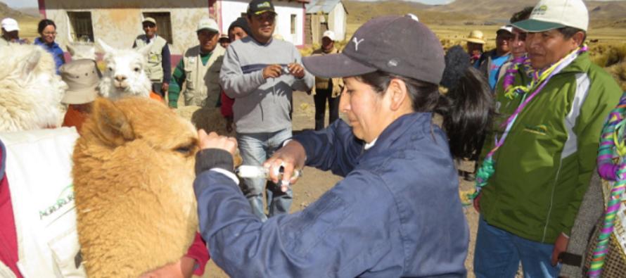 Ministerio de Agricultura se Prepara para las Heladas en Puno