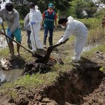 Senasa Entierra Animales para Evitar la Propagación de Enfermedades en el Norte del País