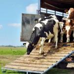 Propagación de Enfermedades en Animales de Granja Podrían Haber sido Provocados por el Transporte