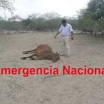 Unidad Ganadera Nacional Exige al Gobierno Central Tomar Medidas de Emergencia