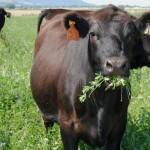 Fertilización de Pasturas Reduce Costos Fijos en Ganadería