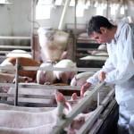 Países de las Américas unen Esfuerzos para Armonizar sus Posiciones en Normas de Sanidad Animal
