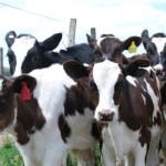 Bioinnovo Lanza al Mercado Tratamiento Contra la Diarrea Neonatal