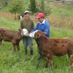 Promueven la Inseminación Artificial de Ganado Bovino en la Municipalidad de Chota
