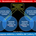 Control y Prevención de la Neurocisticercosis e Hidatidosis: Método Escolar para la Preponderancia y Trascendencia del Cambio de Conducta
