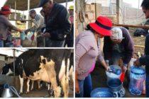 Ganaderos Vendieron 500 litros de Leche Fresca en Arequipa