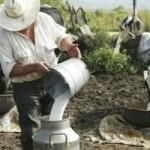Gobierno Intenta Subir el Consumo de Leche Fresca a 120 litros