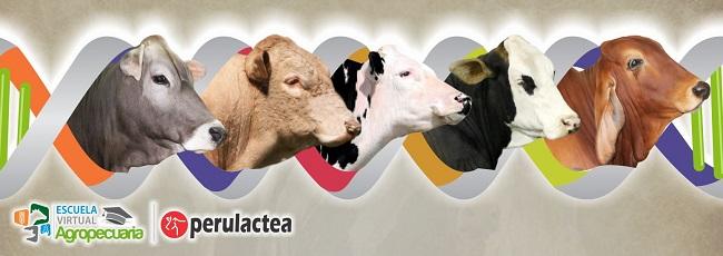 como_hacer_mejoramiento_genetico_en_bovinos