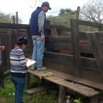 Argentina Logra Mil kilos de Carne por Hectárea