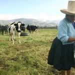 Perú duplicaría la Producción Lechera para Consumo Directo en Ciudadanos