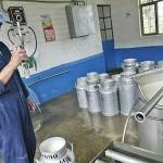 Ministerio de Agricultura Publicará Reglamento Sobre uso de la Leche en Productos Lácteos