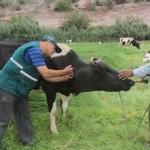 Senasa: Suspende Importación de Carnes de Colombia por Brote de Fiebre Aftosa