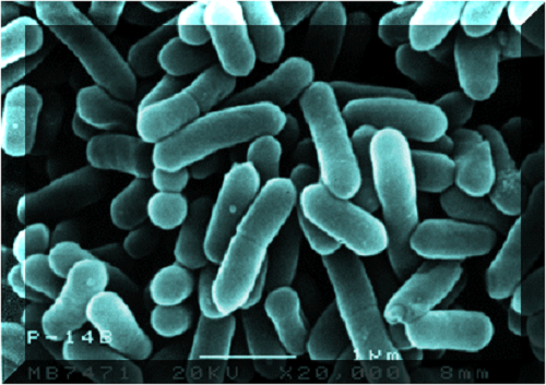 Listeria_monocytogenes_resistencia_a_antibioticos