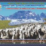 Segunda EXPO – Alpaca y Llama Munaypaqocha 2017