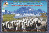 Segunda EXPO – Alpaca y Llama Munaypaqocha 2017 🗓