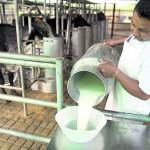 La Producción de Leche Subiría Hasta en 20% si se Prohíbe la Leche en Polvo