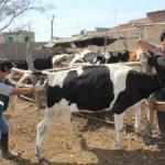 Senasa Colectará 170 Muestras Serológicas para Descarte de Enfermedades en Lambayeque