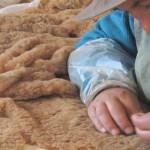 Se Trasladó 17 Vicuñas de la Isla Suasi a la Comunidad Santa Ana de Tarucani, en Puno, para su Conservación y Manejo
