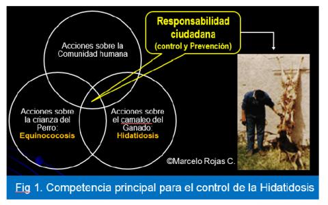 responsabilidad_marcelo_rojas