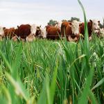 Ecoganadería: Equilibrio Justo entre Ambiente y Producción