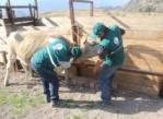 Senasa-registra-vacunación-Arequipa