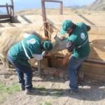 Arequipa: Senasa Registra Vacunación de más de 75 mil Bovinos Contra Carbunco Sintomático