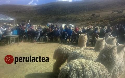 alpaqueros_macusani_01