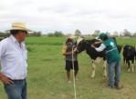 campaña-de-diagnóstico-de-tuberculosis-bovina-arquipa