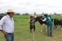 Senasa Inicia Campaña de Diagnóstico de Tuberculosis Bovina en Arequipa