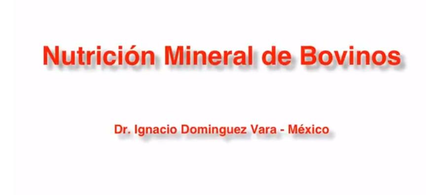 Videoclase: Nutrición Mineral de Bovinos